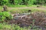 Крупная стихийная свалка в овраге на окраине леса в 150 метрах от Красногорской налоговой службы (ФНС).