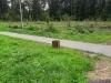 Свалка яблок у дороги в частном секторе деревни Губайлово.